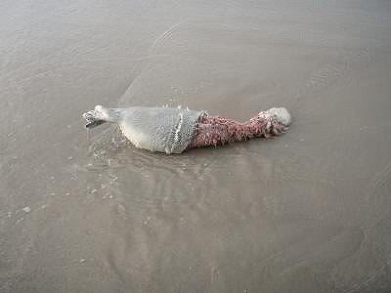 Verminkte zeehonden en bruinvissen