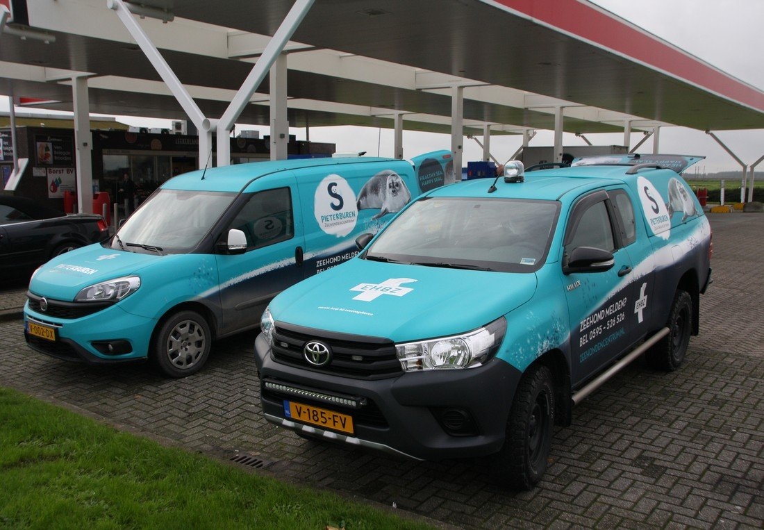 Zeehond Katwijk