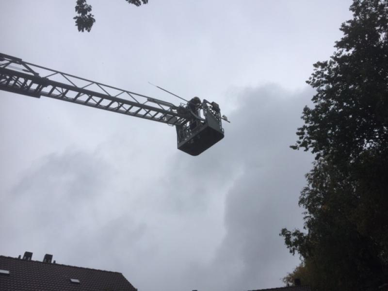 P2 Dier in Problemen Kwekersweg Sassenheim