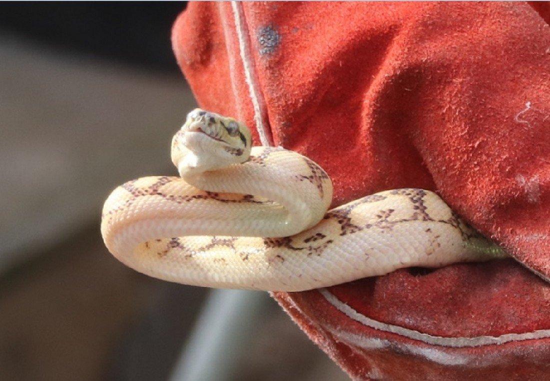 Medewerkers van Duin aannemersbedrijf vinden slang Noordwijk