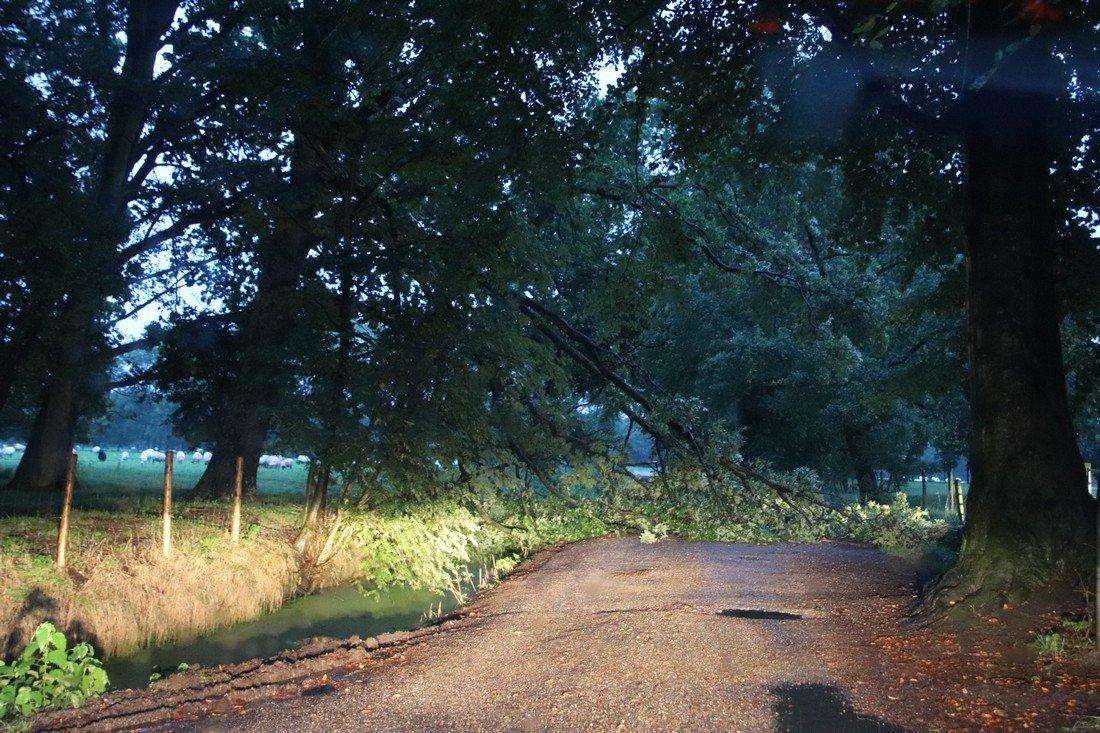 Tak breekt van boom en verspert uitrit op de Varkensboslaan