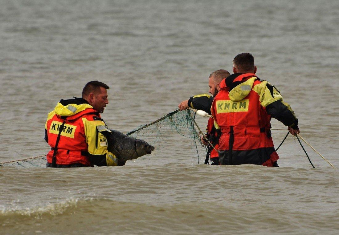 KNRM Katwijk redt zeehond uit visnet Katwijk