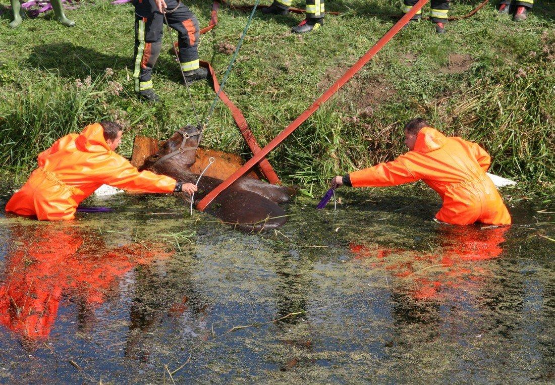 Brandweer heeft handen vol aan paard te water Noordwijk