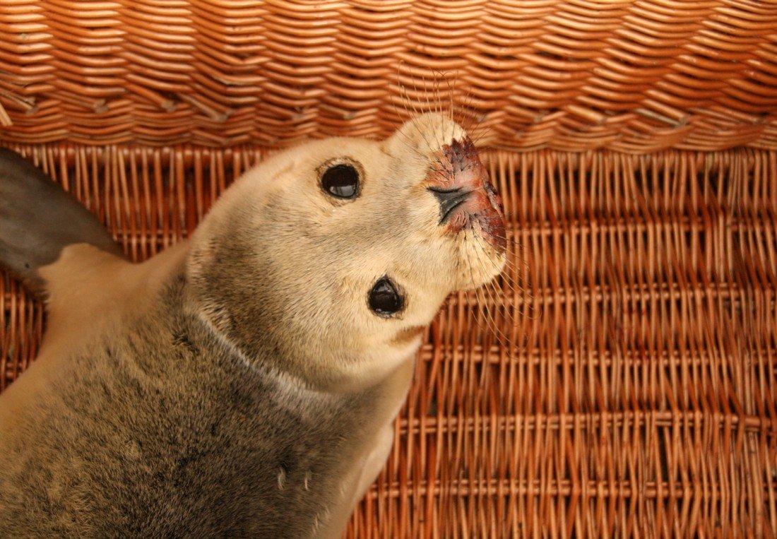 Twee zeehonden naar A Seal