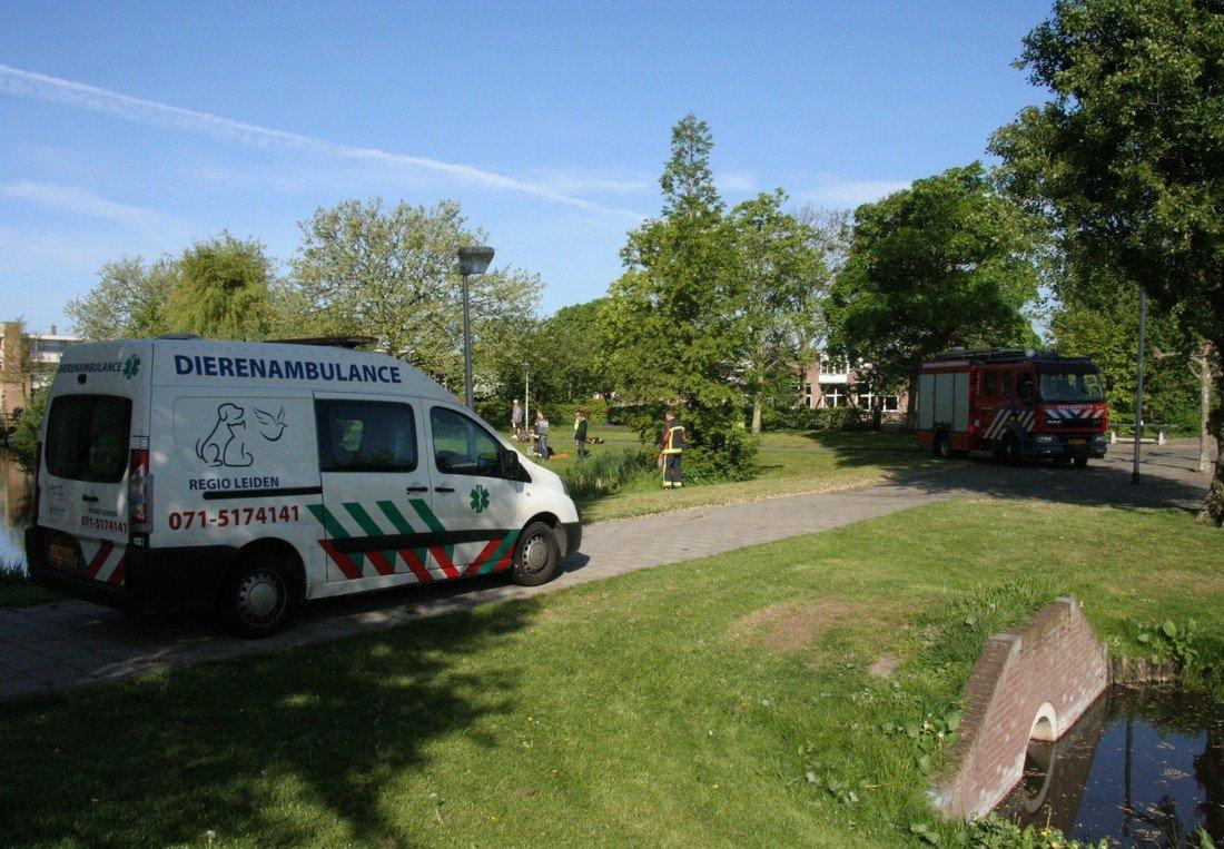 Brandweer rukt uit voor Meerkoet Greunepad Noordwijk