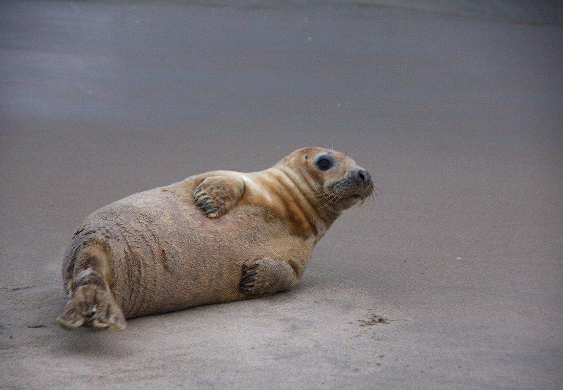 Zeehond uitwatering Katwijk