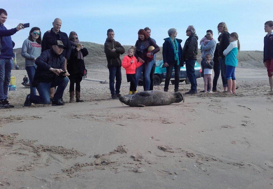 Zeehond Duindamseslag Noordwijk