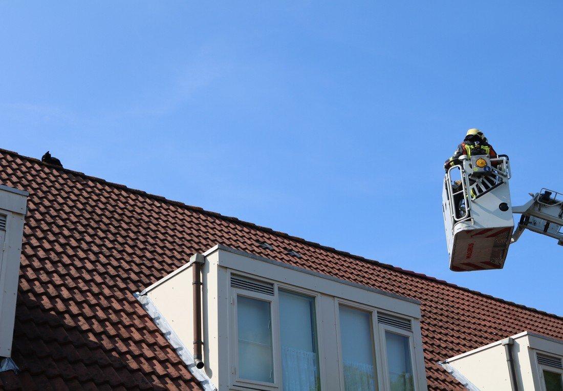 Dier op hoogte  Berline Sassenheim