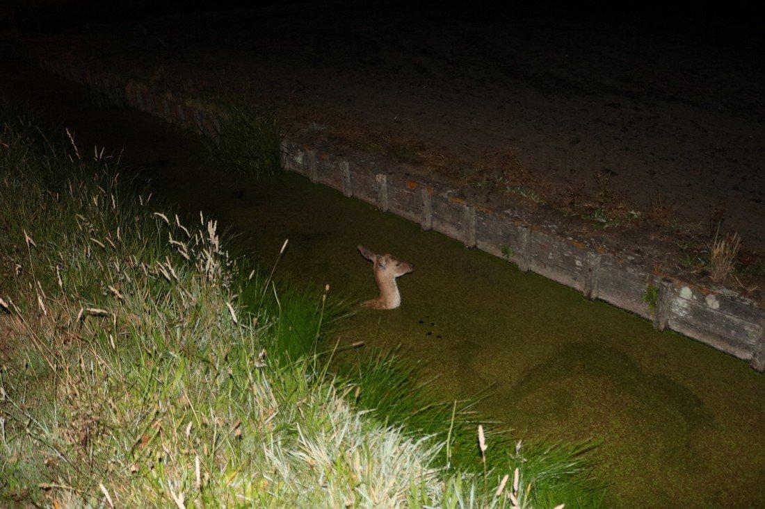 Dier te water Wilgendam / Langevelderslag Noordwijkerhout