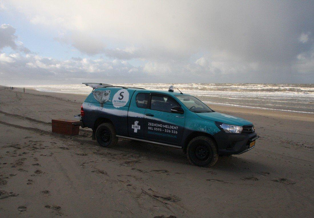 Zieke zeehond Noordwijk