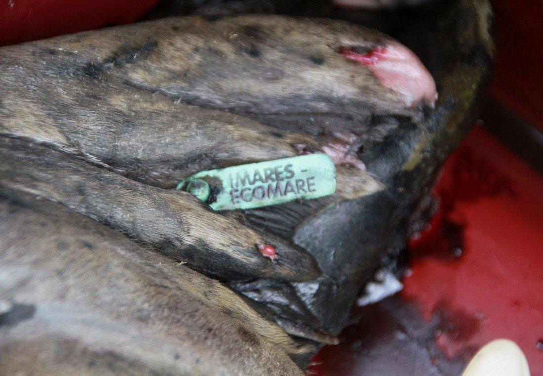 Dode zeehond in de haven van Scheveningen