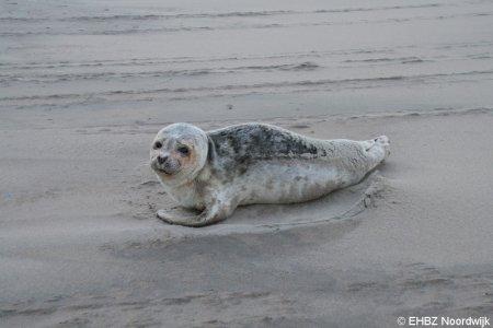 Virus aangespoelde zeehonden