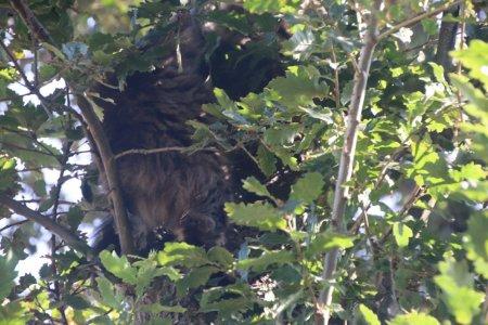 Kat in boom Duinzicht Noordwijk