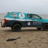 Dode bruinvis Zandvoort