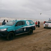 Zeehond voor de boulevard Katwijk