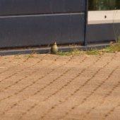 Handgranaat gevonden Keyserwey Noordwijk