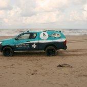 Opnieuw melding over een dode bruinvis Noordwijk