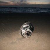 Jonge grijze zeehond Langevelderslag Noordwijk