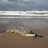Dode zeehond Wassenaar